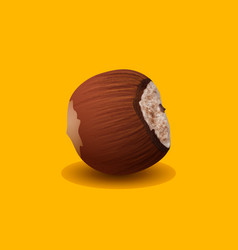 Hazelnut isolated on a yellow background vector