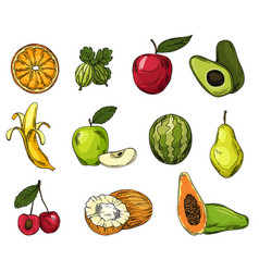 set eco fruits in colored line sketch style vector image