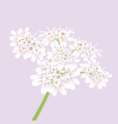 white flowers close up vector image