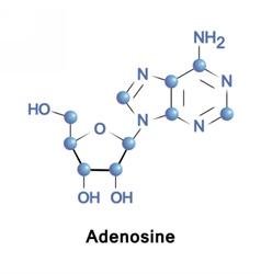 Adenosine is a purine nucleoside vector image