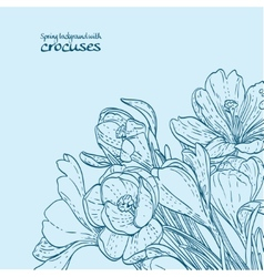 Bouquet of spring crocuses on the vine outline vector