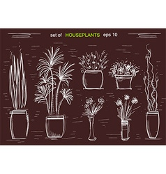 Houseplants on chalk board isolated vector image