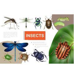 realistic insects colorful composition vector image