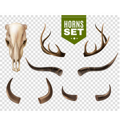 cow skull and horns set vector image vector image