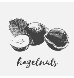 Hazelnuts organic food vector