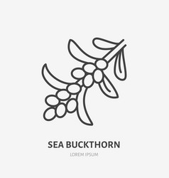 Sea buckthorn flat line icon medical herb sign vector
