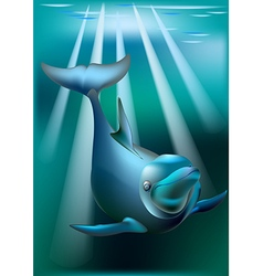 Delfin and rays of sunny vector image