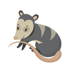 cartoon possum possum vector image