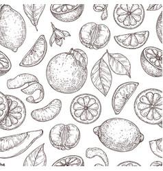 citrus sketch pattern natural lemon orange leaves vector image