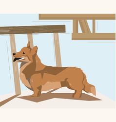 Corgi dog standing on floor vector