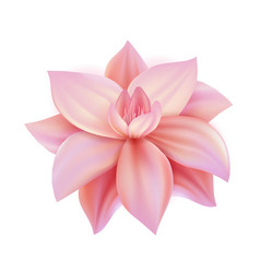 Realistic pink flower cherry lotos vector