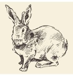 Rabbit engraving style vintage hand drawn sketch vector image vector image