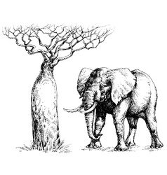 African elephant and baobab vector