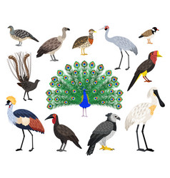 colored exotic bird set vector image