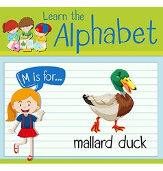 Flashcard letter M is for mallard duck vector