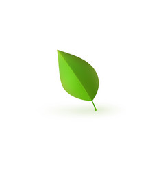 green fresh plant leaf isolated on white vector image