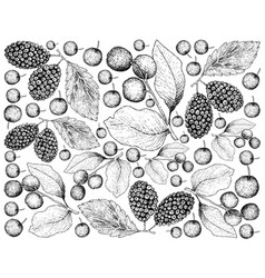 Hand drawn background of black cherries and black vector