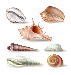 Set of seashells of various vector
