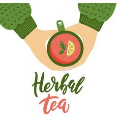 two hands are holding a cup hot herbal tea vector image
