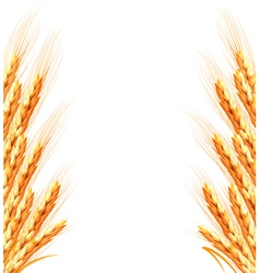 Ears of wheat background vector image