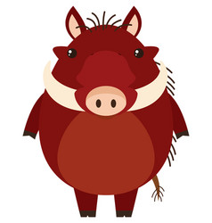 warthog with happy face vector image