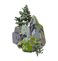 Coniferous trees among rocks covered with the vector