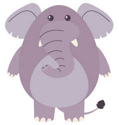 Fat elephant on white background vector