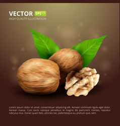 Realistic walnuts with leaves on brown background vector