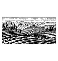 Scenic view vineyards fields and hills vector