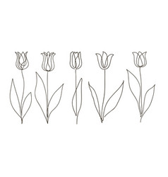 tulip flower set continuous drawing vector image
