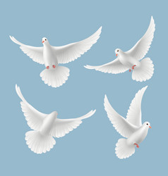 white pigeons dove love flying birds in sky vector image
