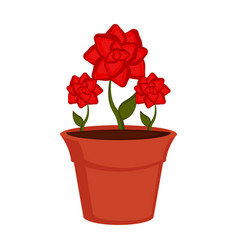 isolated roses on a flower pot vector image