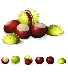 chestnuts isolated on white background vector image