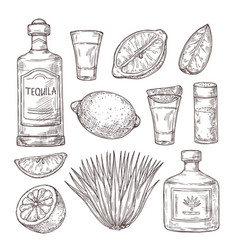 agave tequila sketch vintage glass shot bar vector image
