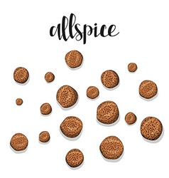 Allspice isolated object sketch Spice for food vector image