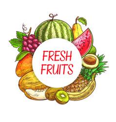 Fresh fruits sketch poster farm market vector