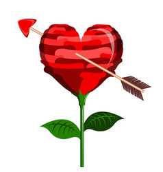 Heart shaped flower with a cupid arrow vector