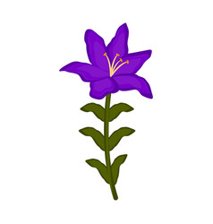 isolated orchid flower icon vector image