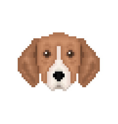 portrait of puppy great anglo-french tricolour vector image