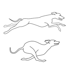 Running dogs whippet breed two poses vector image