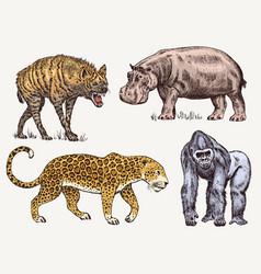 set african animals hippopotamus leopard hyena vector image