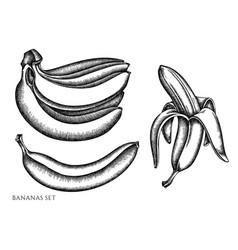 set hand drawn black and white bananas vector image
