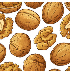 walnut nuts pattern on white background vector image