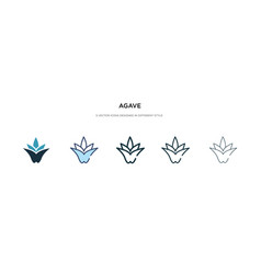 Agave icon in different style two colored and vector
