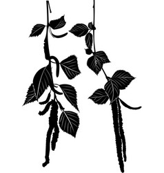 birch branches with leaves and catkins vector image