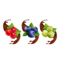 Blueberry gooseberry and red currant in chocolate vector