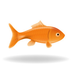 Goldfish isolated vector