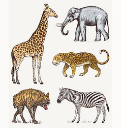 set african animals elephant giraffe leopard vector image