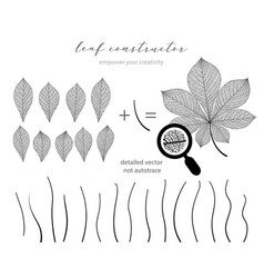 chestnut leaf set and branch leaves fall vector image