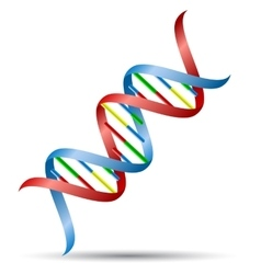 DNA helix vector image